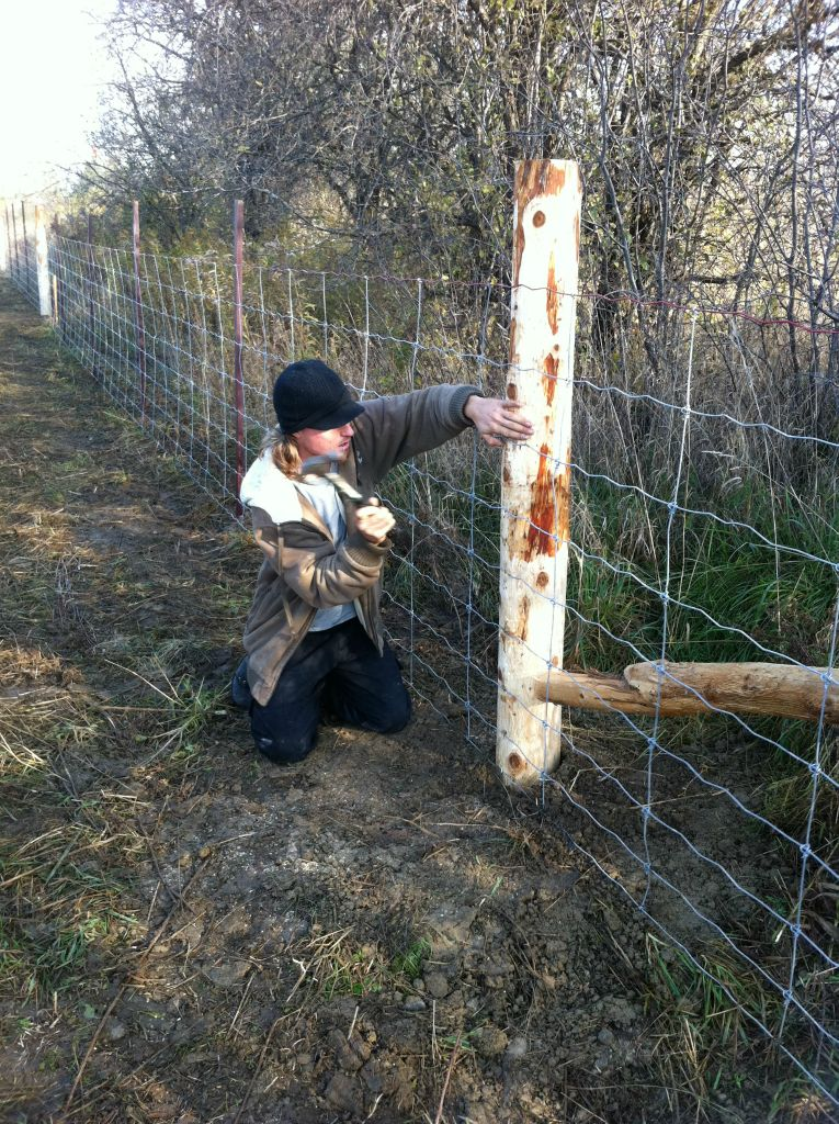 Fences-32